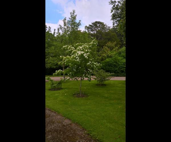 Weston Hall Gardens